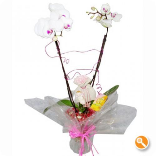 Jarra Phalaenopsis